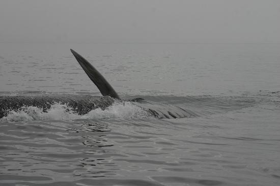 La Maison Harvey Lessard: whale