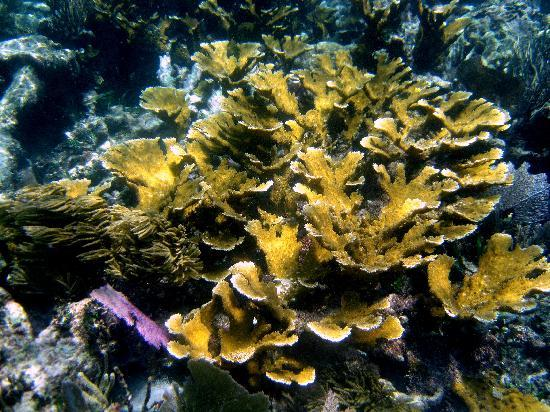 National Reef Park of Puerto Morelos: Live coral