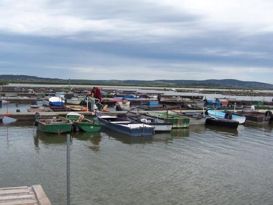 Velence, ฮังการี: boats on the lake