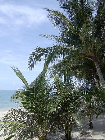 วีคเอนเดอร์ รีสอร์ท: Beach