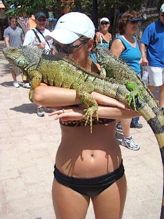 ซากเมืองมายันแห่งทูลุม: Me with the iguanas. I'll love you forever.