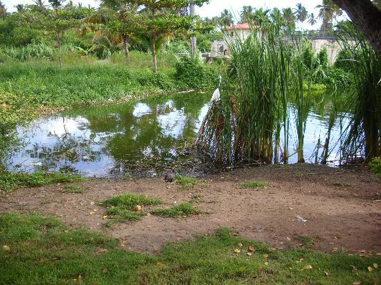 IFA Villas Bavaro Resort & Spa: el lago del hotel