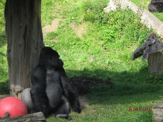 Jersey Zoo: Durrell