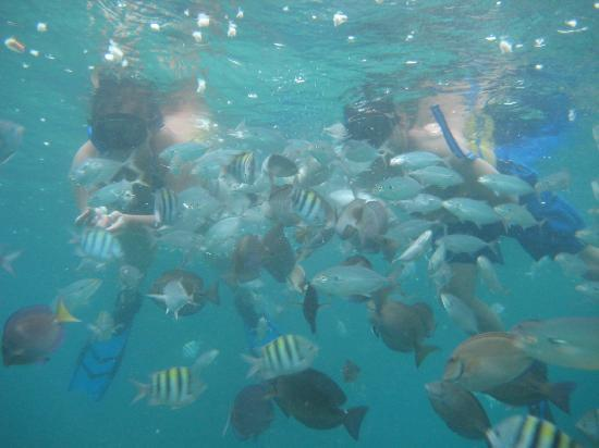 Luxury Bahia Principe Ambar Blue: Reef Explorer: Feeding the fish