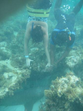 Luxury Bahia Principe Ambar Blue: Going for the shark