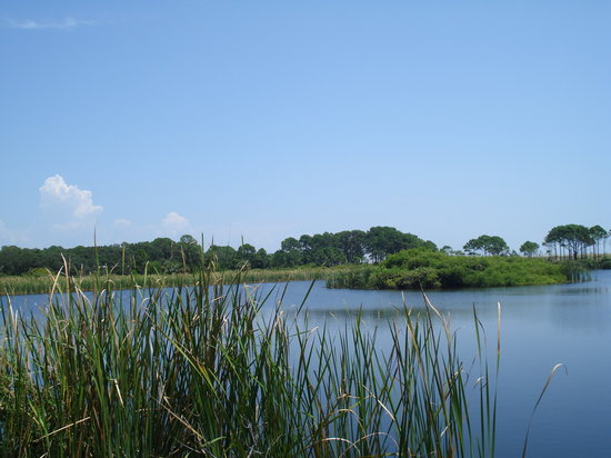 St. Andrews State Park: Alligator viewing area
