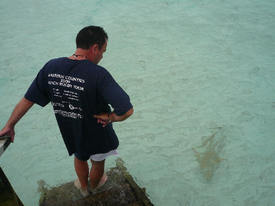Veligandu Island Resort & Spa: Shark by the steps