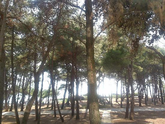 มาลิโลสินจ์, โครเอเชีย: This is not just a spot under pines