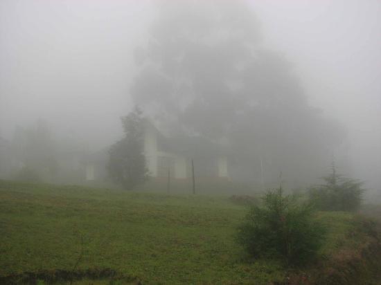Misty Camp Noel