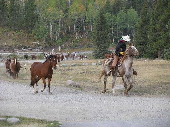 320 Guest Ranch: Bringing in the horses