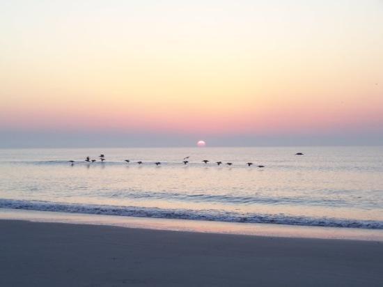 เฟอร์นันดินาบีช, ฟลอริด้า: Good morning Amelia Island!