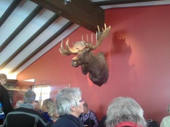 Laax, สวิตเซอร์แลนด์: Curnius-Elk