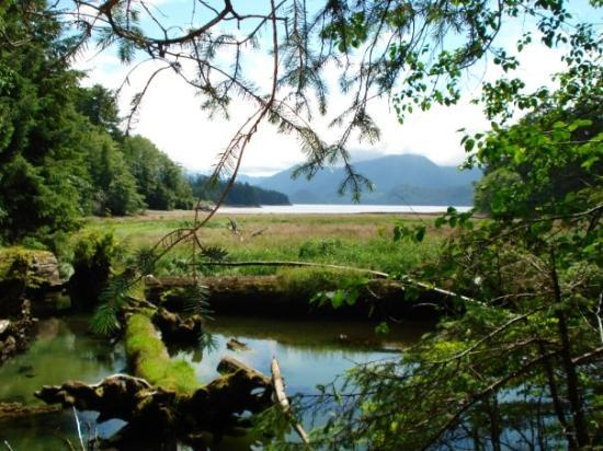 Sitka National Historic Park/Totem Park ภาพถ่าย