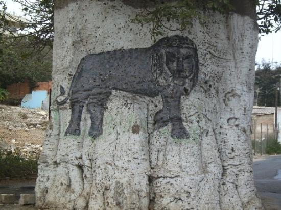 ดาการ์, เซเนกัล: La parte de atrás del Baobab que nos indica el camino a la playa. El león es otro símbolo import
