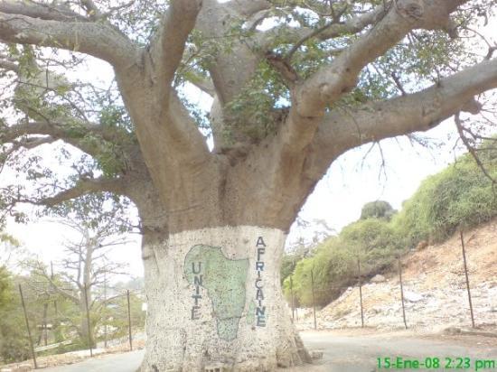 ดาการ์, เซเนกัล: El Baobab, simbolo de Africa.  Siguiendo el camino de detrás del Baobab, nos dirijimos a una p