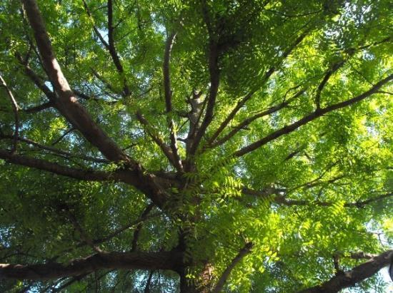 Panglao Island, ฟิลิปปินส์: my shade tree