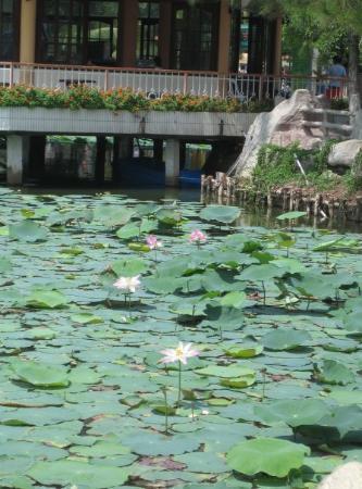 โฮจิมินห์ซิตี, เวียดนาม: Lotus pond