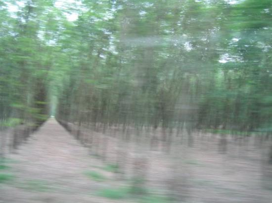 โฮจิมินห์ซิตี, เวียดนาม: You can't tell from this horrible picture at high tour-bus speed, but this was a field of beauti