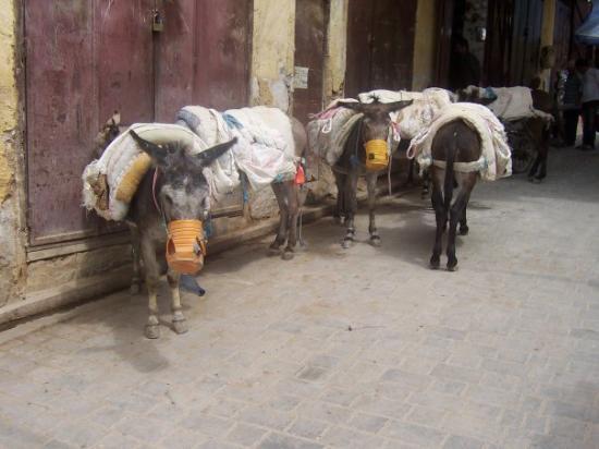 ฟาซ, โมร็อกโก: Donkeys waiting in the medina