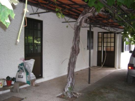 โกอินบรา, โปรตุเกส: Maison du portugal