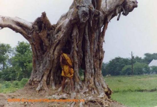 Bhubaneswar ภาพถ่าย