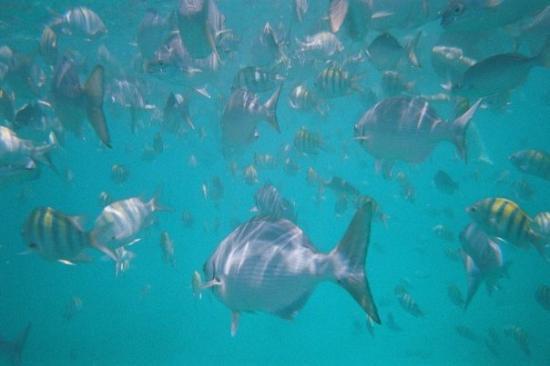 บริดจ์ทาวน์, บาร์เบโดส: ... while snorkelling