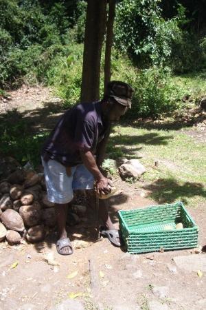 แคสตรีส์, เซนต์ลูเซีย: man splitting coconuts
