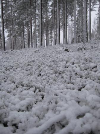 Nurmes, ฟินแลนด์: Foresta finland