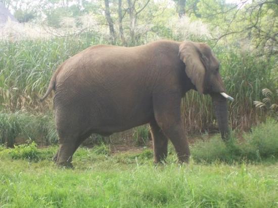 Nashville Zoo ภาพ