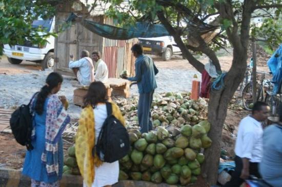 บังคาลอร์, อินเดีย: coconuts anyone?