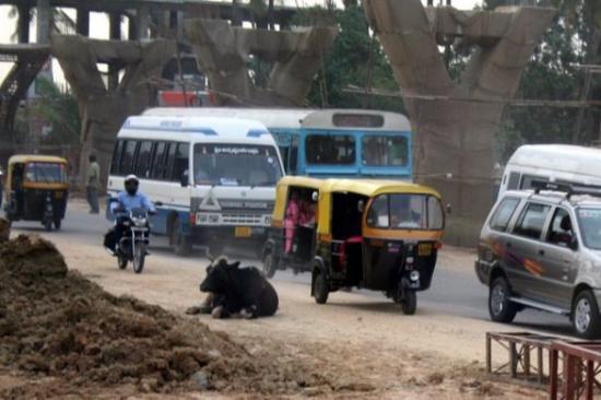 บังคาลอร์, อินเดีย: lost cow