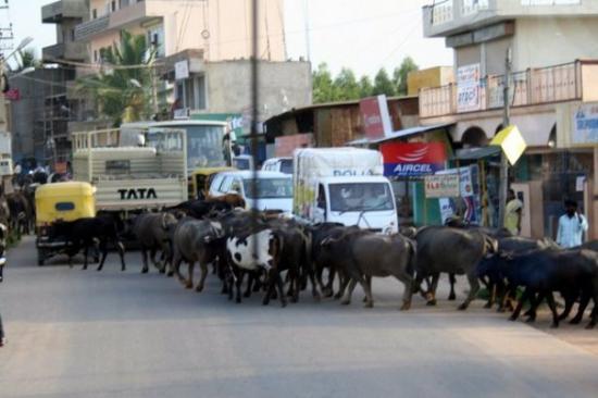 บังคาลอร์, อินเดีย: traffic jam