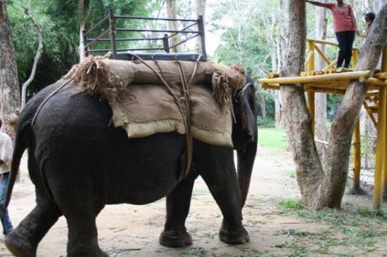 บังคาลอร์, อินเดีย: my ride