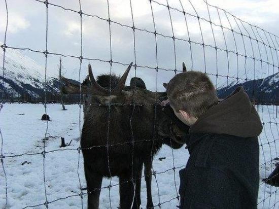 แองเคอเรจ, อลาสกา: He was really friendly. he let me pet him