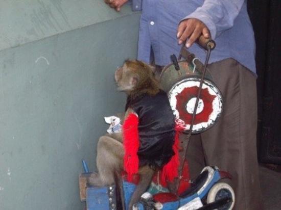 บาหลี, อินโดนีเซีย: monkey
