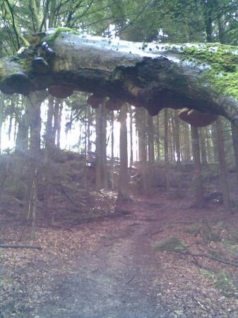 Bad Griesbach im Rottal ภาพถ่าย