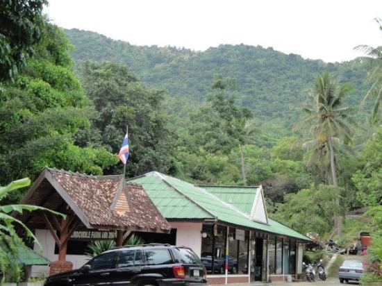 เกาะสมุย, ไทย: welcome to the jungle