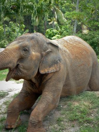 Zoo Miami: Miami Metro Zoo
