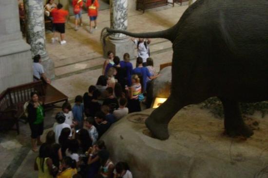 พิพิธภัณฑ์ประวัติศาสตร์ธรรมชาติแห่งชาติ สมิธโซเนียน: It looks like he's pooping on the kids.  I love it.