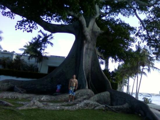 Henry Morrison Flagler Museum: Grant and the Big Tree. From the Cell