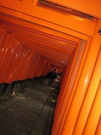 เกียวโต, ญี่ปุ่น: tunnel in the tori gates