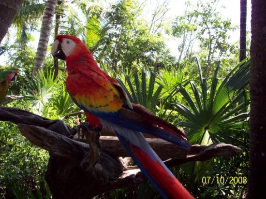 พลายาเดลคาร์เมน, เม็กซิโก: Xel-ha, Playa Del Carmen, Mexico