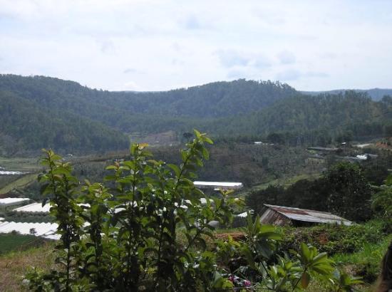 ดาลัด, เวียดนาม: Dalat= Tea and Cofffee plantations