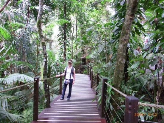แคนส์, ออสเตรเลีย: Cairns, Australia Kuranda Rainforest