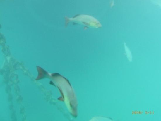 แคนส์, ออสเตรเลีย: Cairns, Australia swimming fish