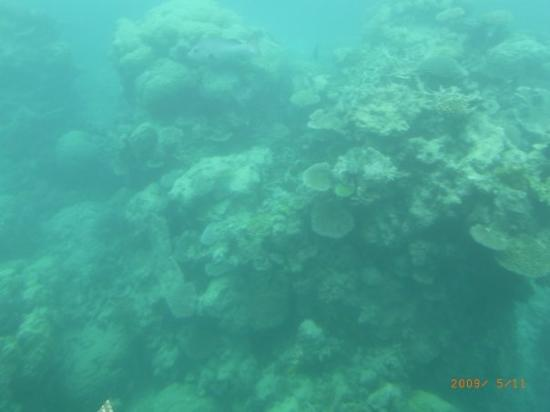 แคนส์, ออสเตรเลีย: Cairns, Australia Reef