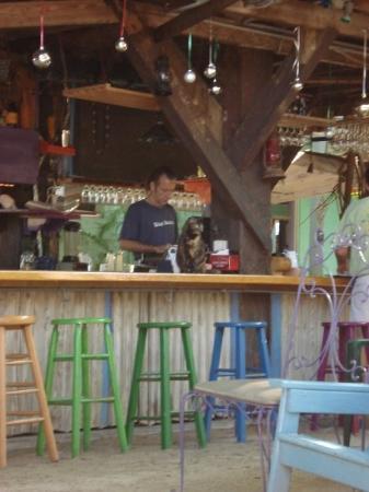 คีย์เวสต์, ฟลอริด้า: Notice cat on bar...