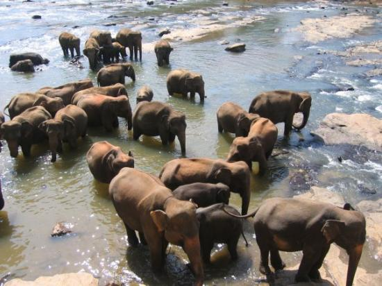 โคลัมโบ, ศรีลังกา: Pinnawela Elephant Orphanage, Sri Lanka