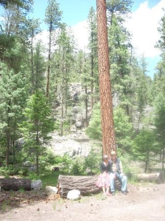 ซานตาเฟ, นิวเม็กซิโก: ponderosa pine, outside durango, colorado