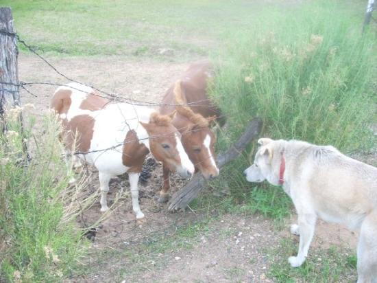 ซานตาเฟ, นิวเม็กซิโก: clay confronts pigmy horses